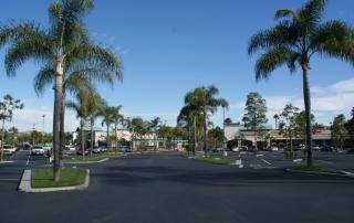palm-tree-fertilize
